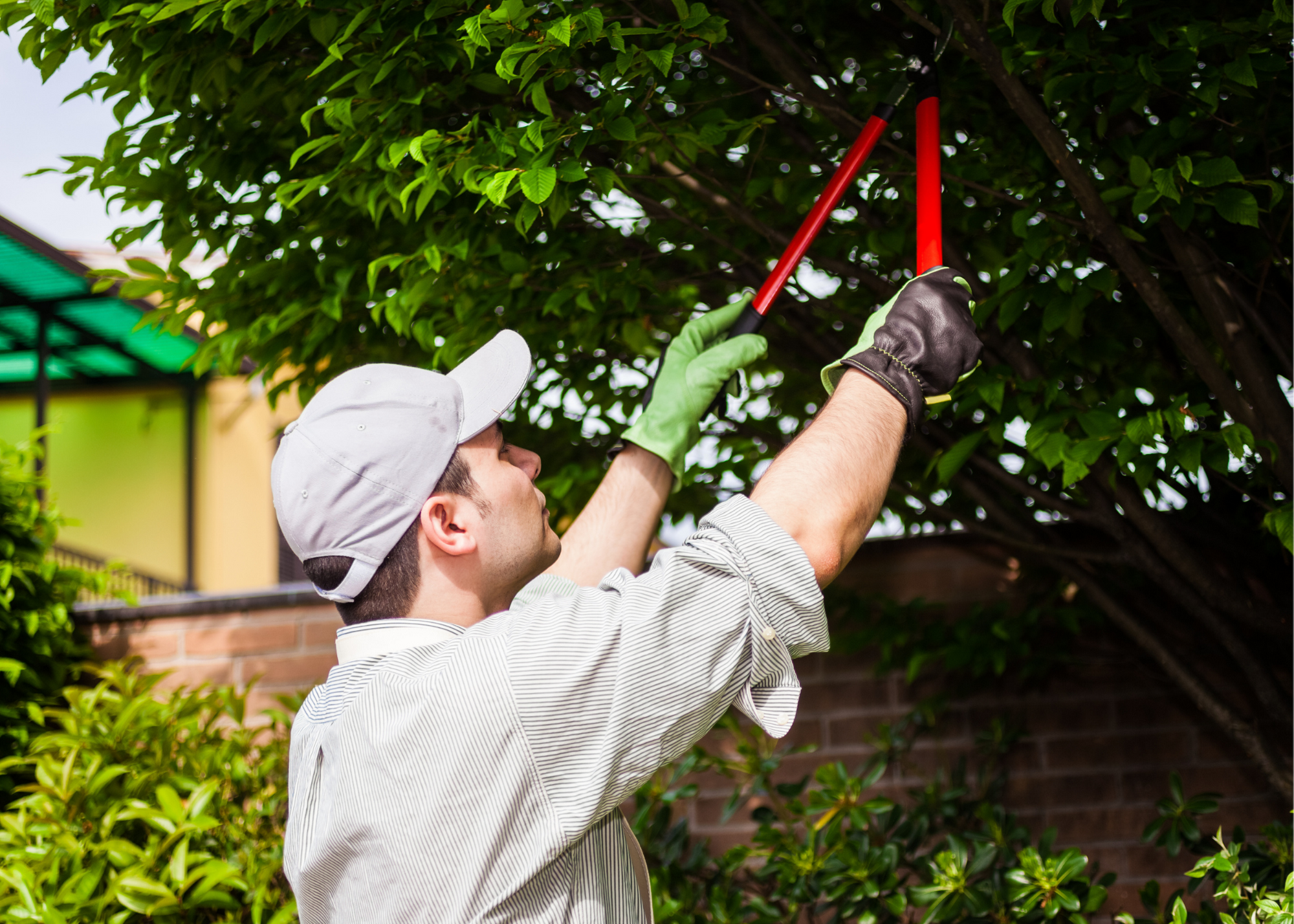 tree service st louis county