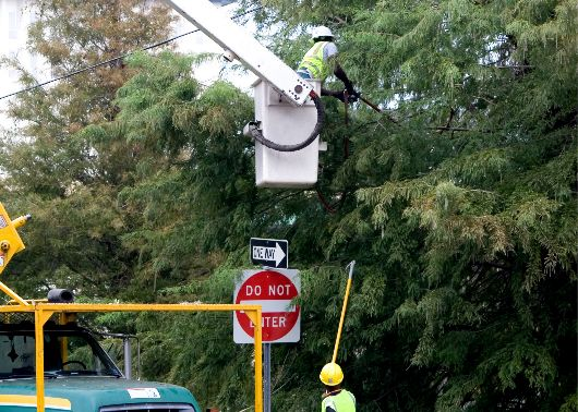 tree trimmers st louis
