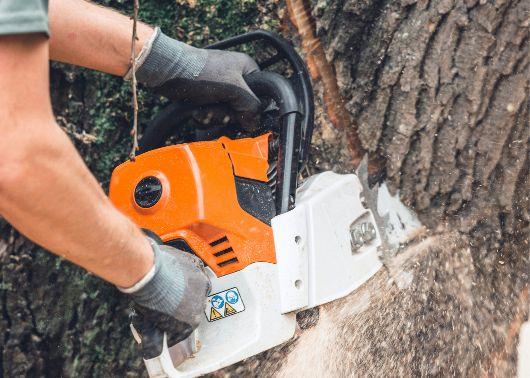 tree service st louis