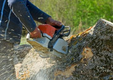 tree trimming service st louis mo