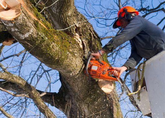 tree service st louis mo